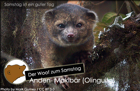 DerWoofzumSamstag_Anden-Makibaer